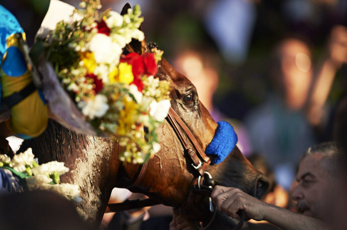 American Pharoah wins theTriple Crown, the first horse to do so in 37 years