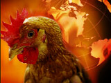 Bird flu to be pandemic yet?