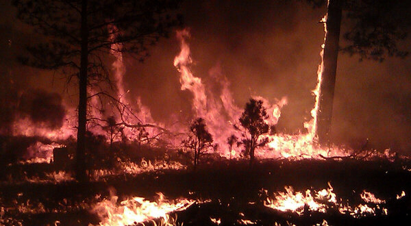 Blaze in Gila National Forest now largest wildfire in New Mexico history