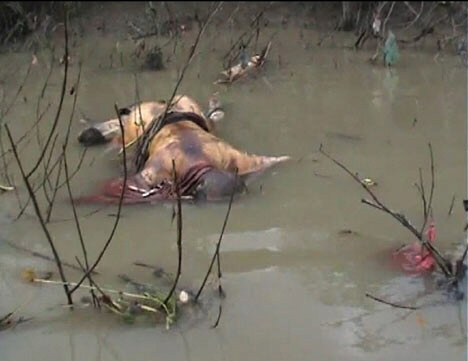Bloated bodies clog the rivers and streams duing Myanmar genocide