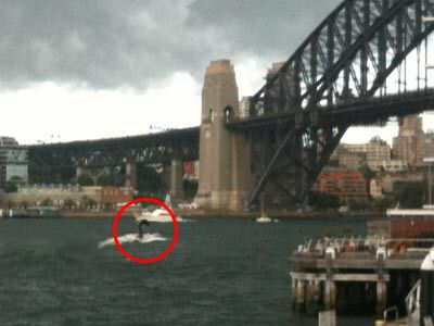 Nessie-like creature spotted in Sydney Harbour waters