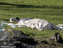 The body of a dead girl is covered with a blanket